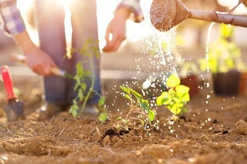 Cheap and Free Ways to Grow Your Garden