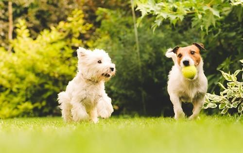 cute-puppies-playing-ball