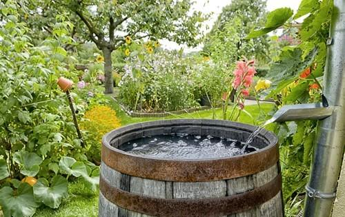 rain-barrel-collect-water